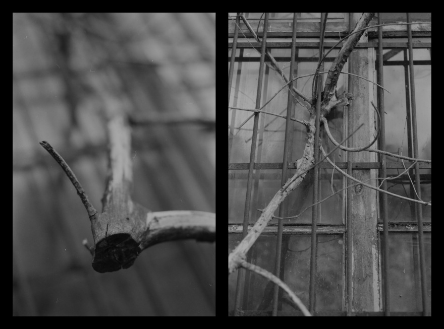 And The Pallor Disappear-Final-Diptych05