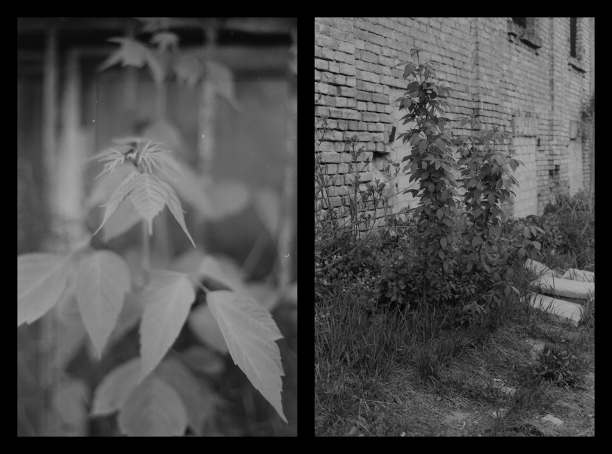 And The Pallor Disappear-Final-Diptych08