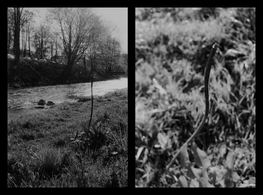 And The Pallor Disappear-Second One-Diptych02